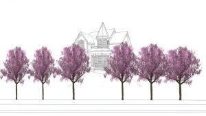 cây phong thủy trước nhà